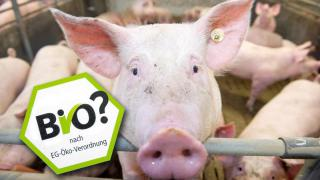 Bioschwein-Trickser haben Millionen-Schaden verursacht