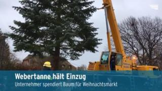 Webertanne für Weihnachtsmarkt in Neubrandenburg (Video)