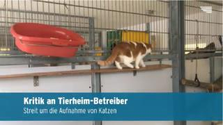 Kritik am Tierheim in Neubrandenburg (Video)