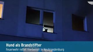 Hund löst Brand aus (Video)